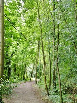 sentier forestier sur l'ile d'Andresy