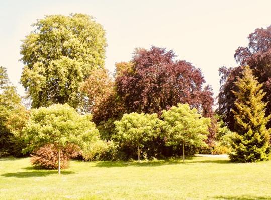 varieté d'arbres au Parc du château de Saint Germain en laye
