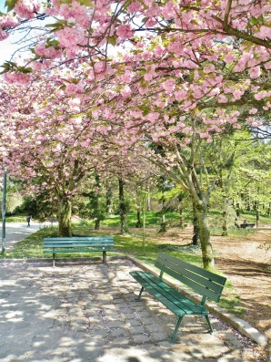 Parc Georges Brassens (2)